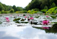 ここはまるで海外?高知北川村観光!モネの庭にうっとり癒される♡