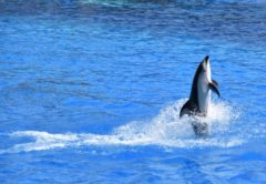 坂本龍馬で有名な高知県桂浜市にある「桂浜水族館」ってどんな場所?