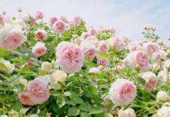 【建築美×自然美】1年中楽しめる「高知県立牧野植物園」で植物に癒されよう♪