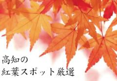 【定番から穴場まで】秋の紅葉!高知の綺麗な紅葉スポット厳選ご紹介!